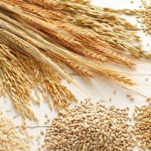 Orzo, farro e quinoa: gli altri cereali piacciono sempre di più