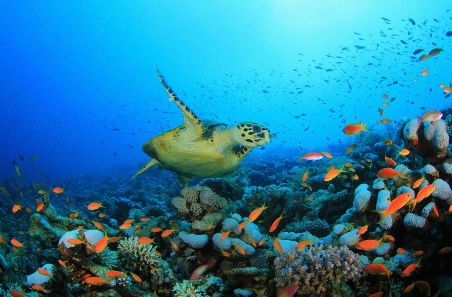 8 giugno: Giornata mondiale degli Oceani