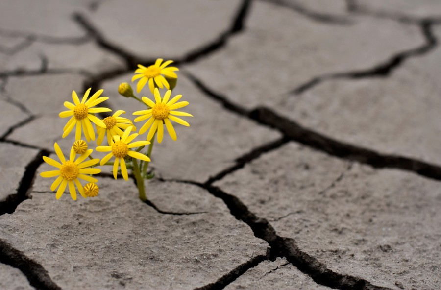 Resilienza: così le difficoltà non ti fanno più paura