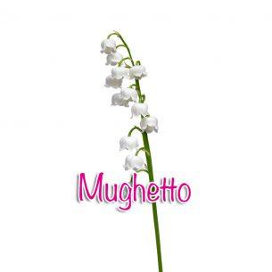 Mughetto