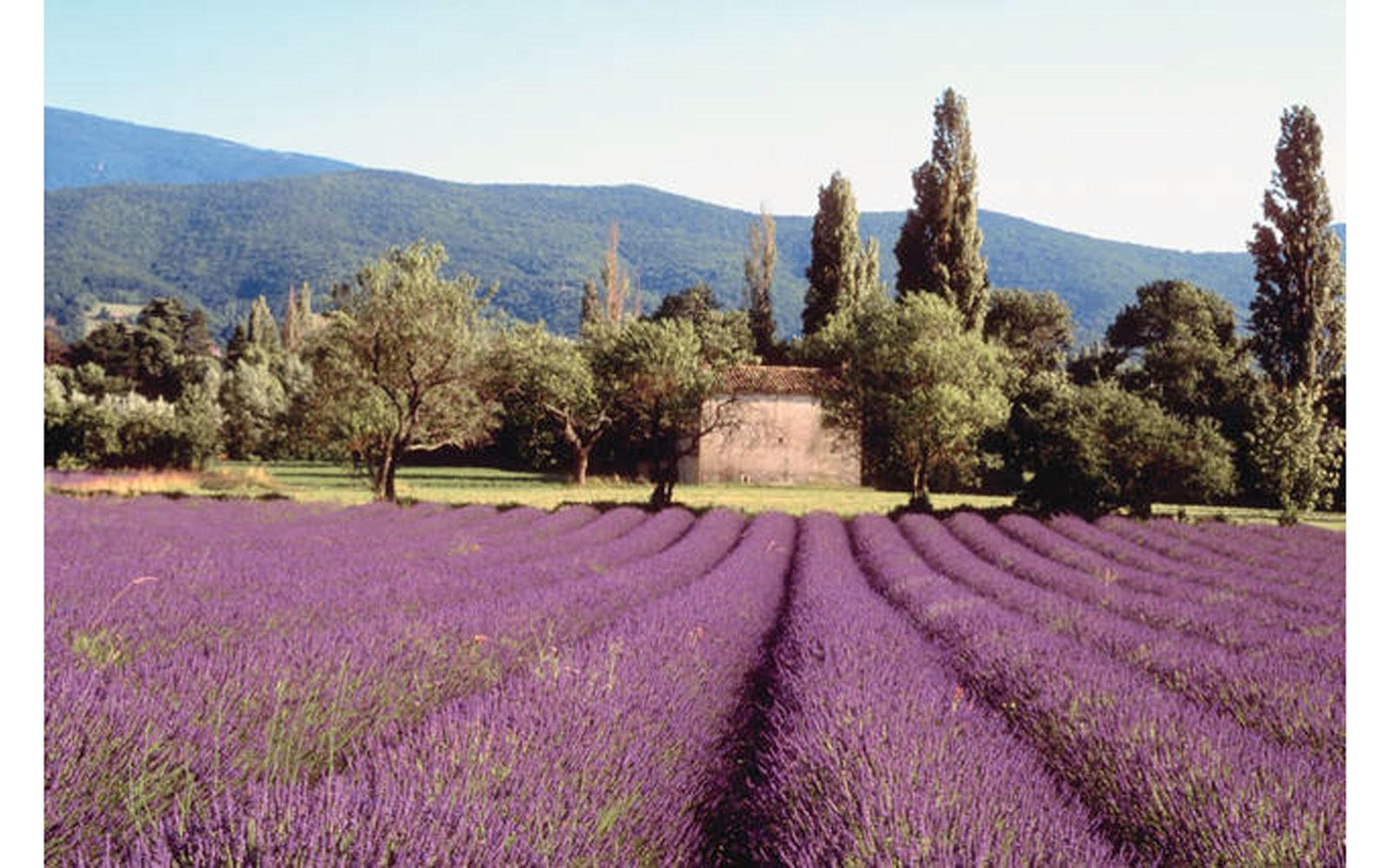Castelnuovo, Assisi