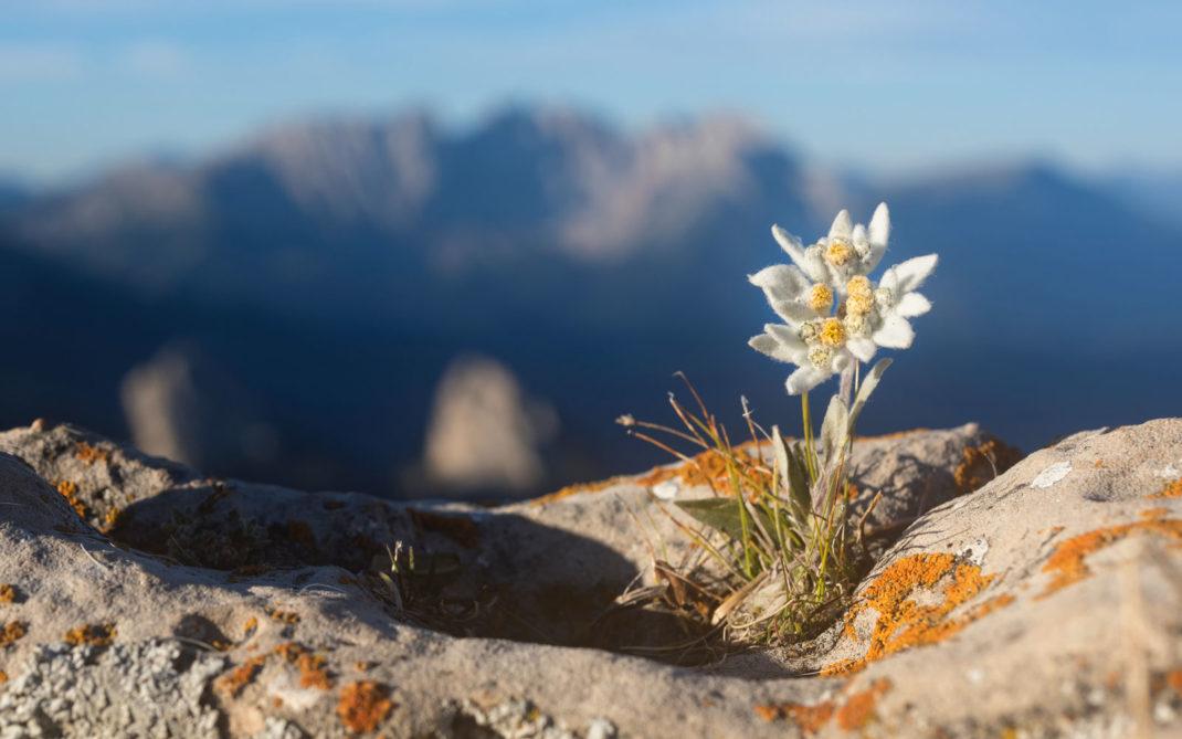 piante-montagna