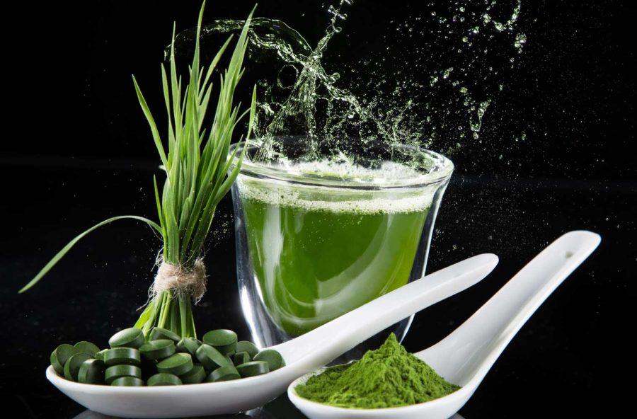 Alghe: una boccata di ossigeno