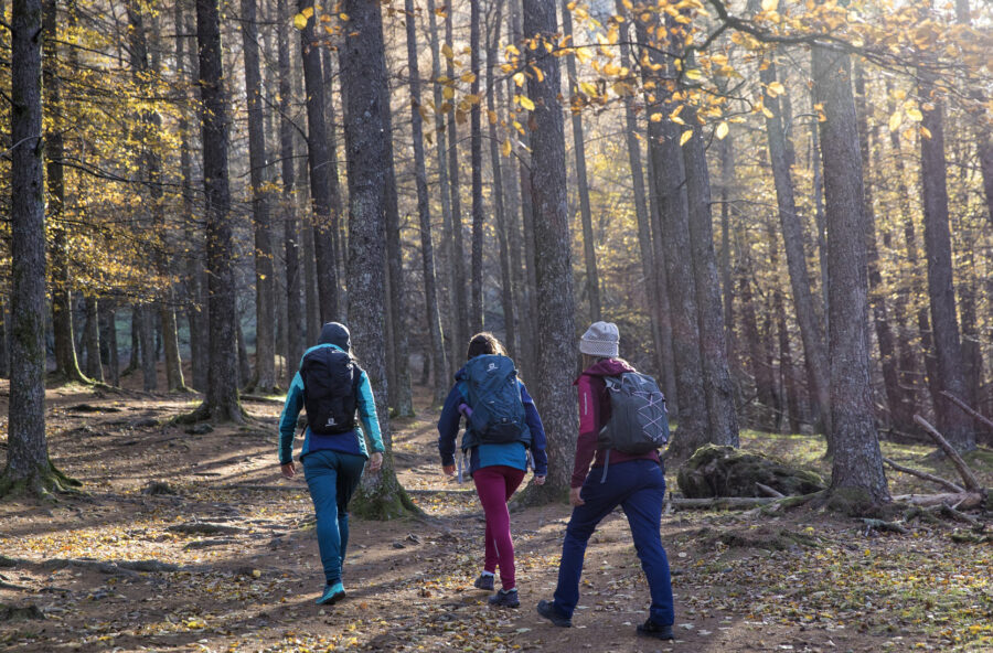 Forest bathing: dove fare i bagni di bosco più salutari