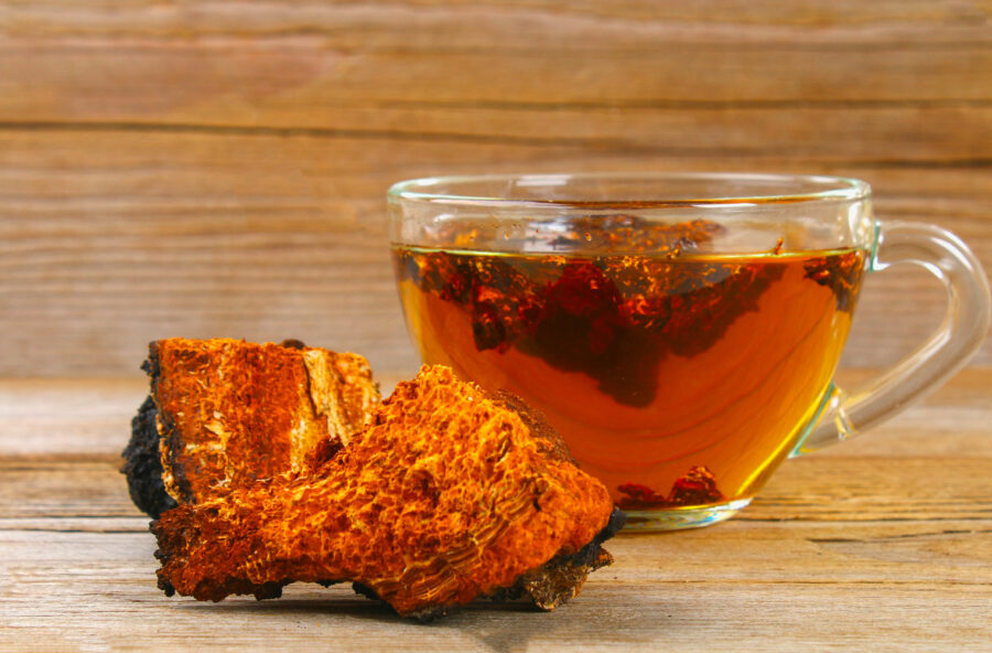 Superfood: scopri il fungo Chaga
