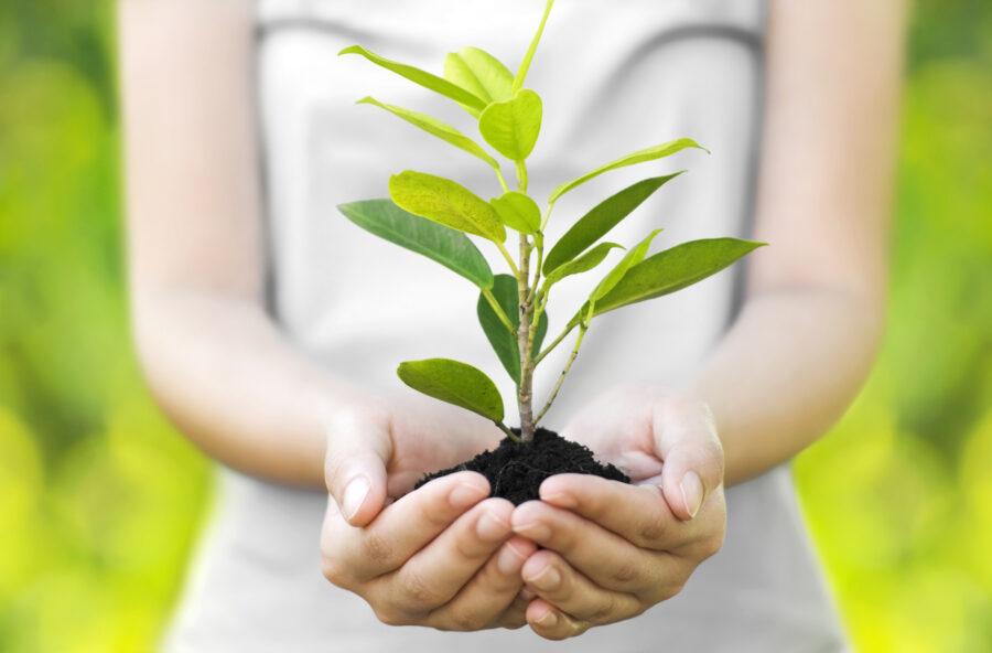 Ambiente: 10 piccoli gesti per salvare il pianeta