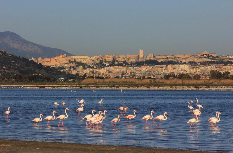 Animal watching: tour nei parchi nazionali italiani più belli