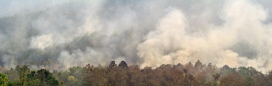 L'Amazzonia brucia, i pericoli per la salute