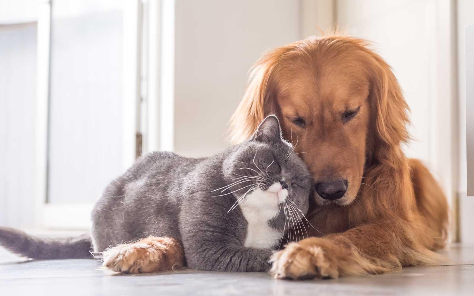 Coronavirus, come comportarsi con cane e gatto
