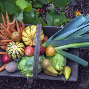2021: per la FAO è l'anno della frutta e della verdura